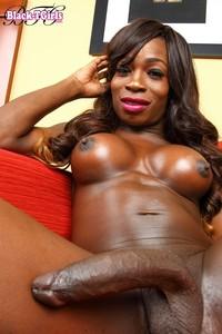 ebony shemale hwhhm free porn